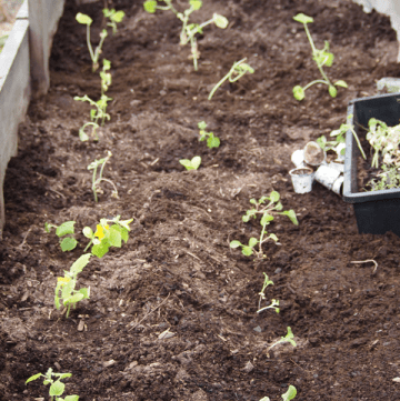 Gardening Tips For Beginners   Guest Post from The Grant Life on MealPlanningMagic.com