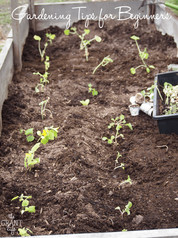 Gardening Tips For Beginners | Guest Post from The Grant Life on MealPlanningMagic.com